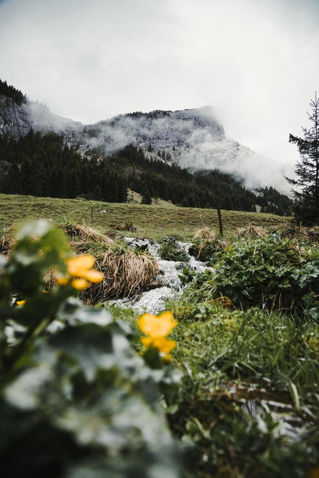 Foggy mountains and yellow flowers photo