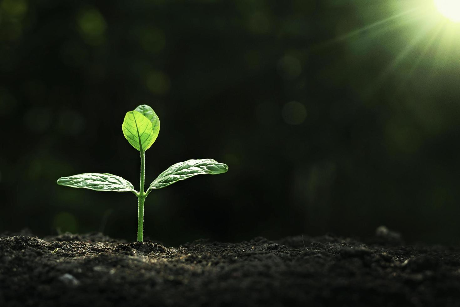 Plant growth on the soil photo