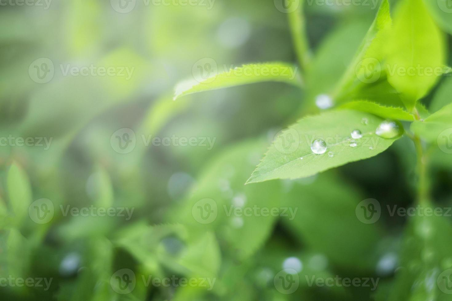 Rain droplets photo