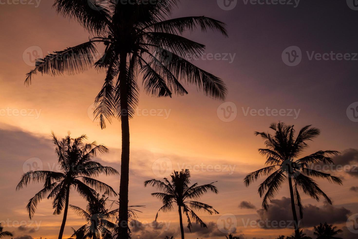 palmeras al atardecer hermoso foto
