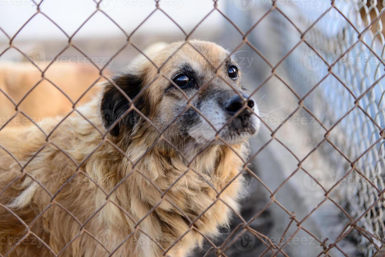 perro en refugio foto