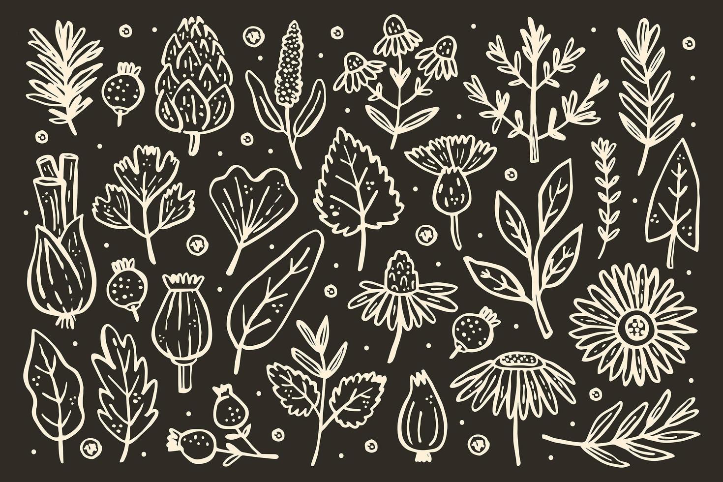 gran conjunto de hierbas. plantas forestales. flor, rama, hoja, lúpulo, cono. vector