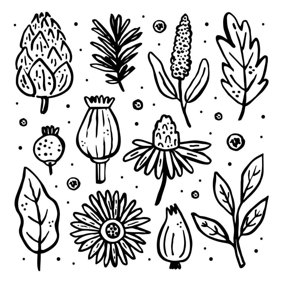 plantas silvestres de jardín. vector