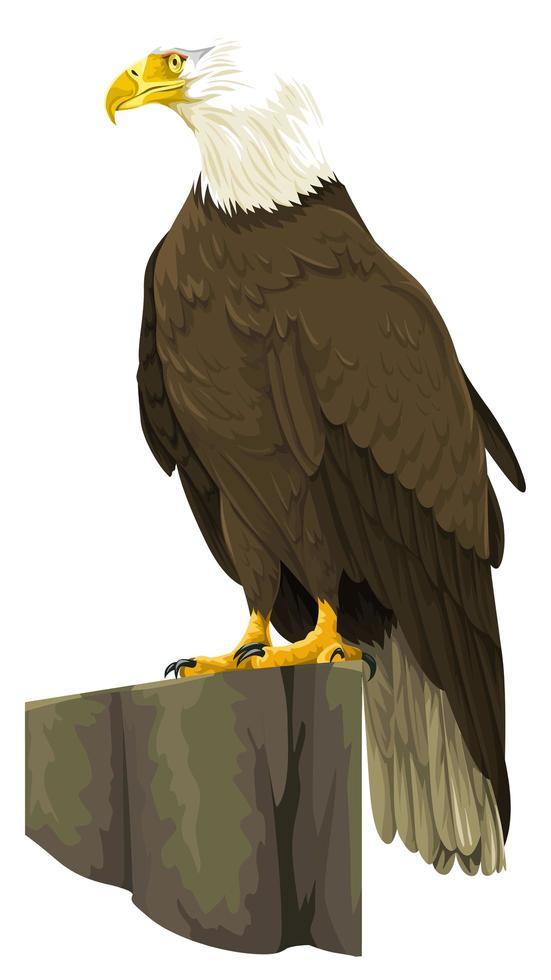águila calva, posado, en, roca vector