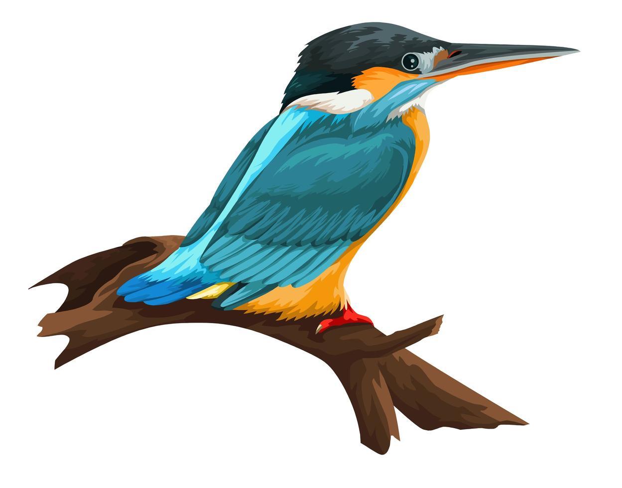 Blue Kingfisher Bird Perching on Branch vector