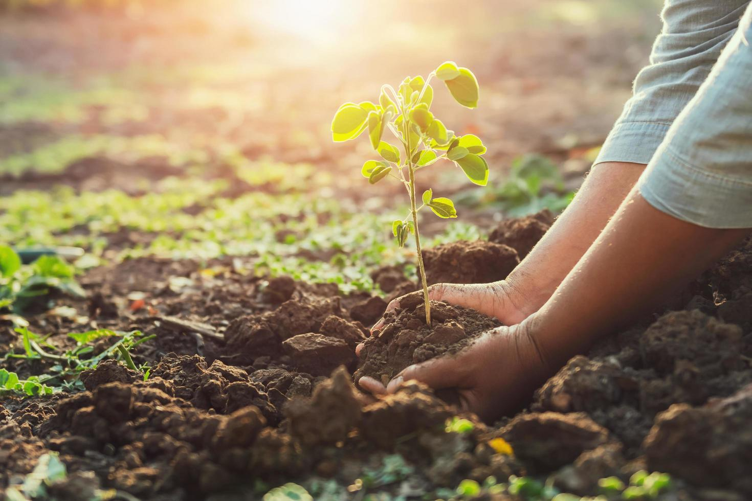 het planten van een jonge boom foto