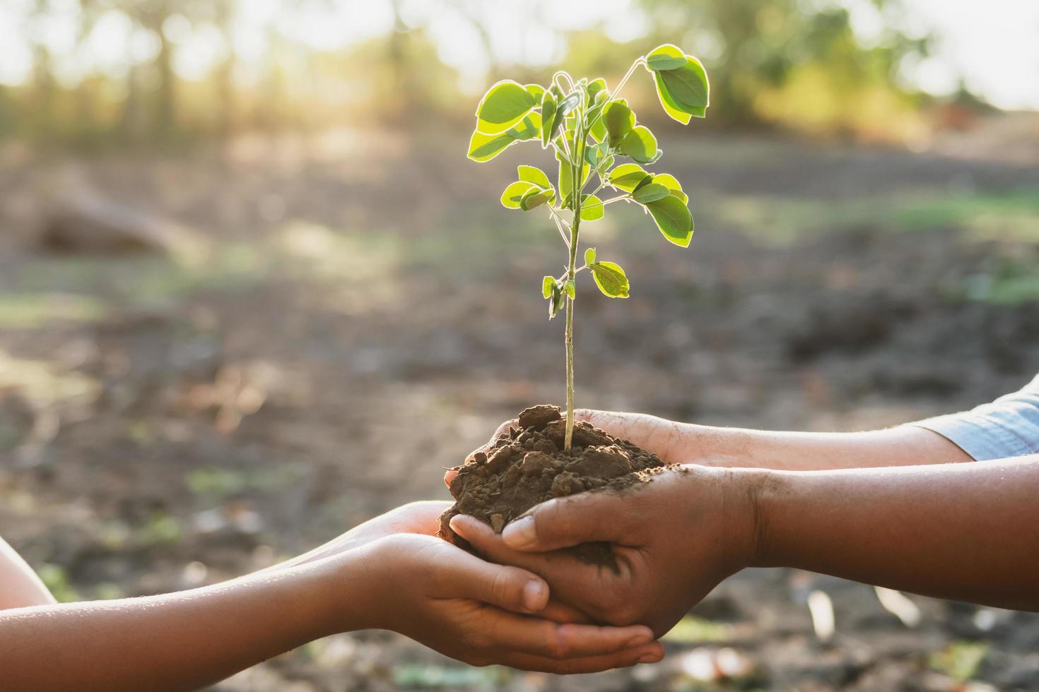 manos sosteniendo la planta joven foto