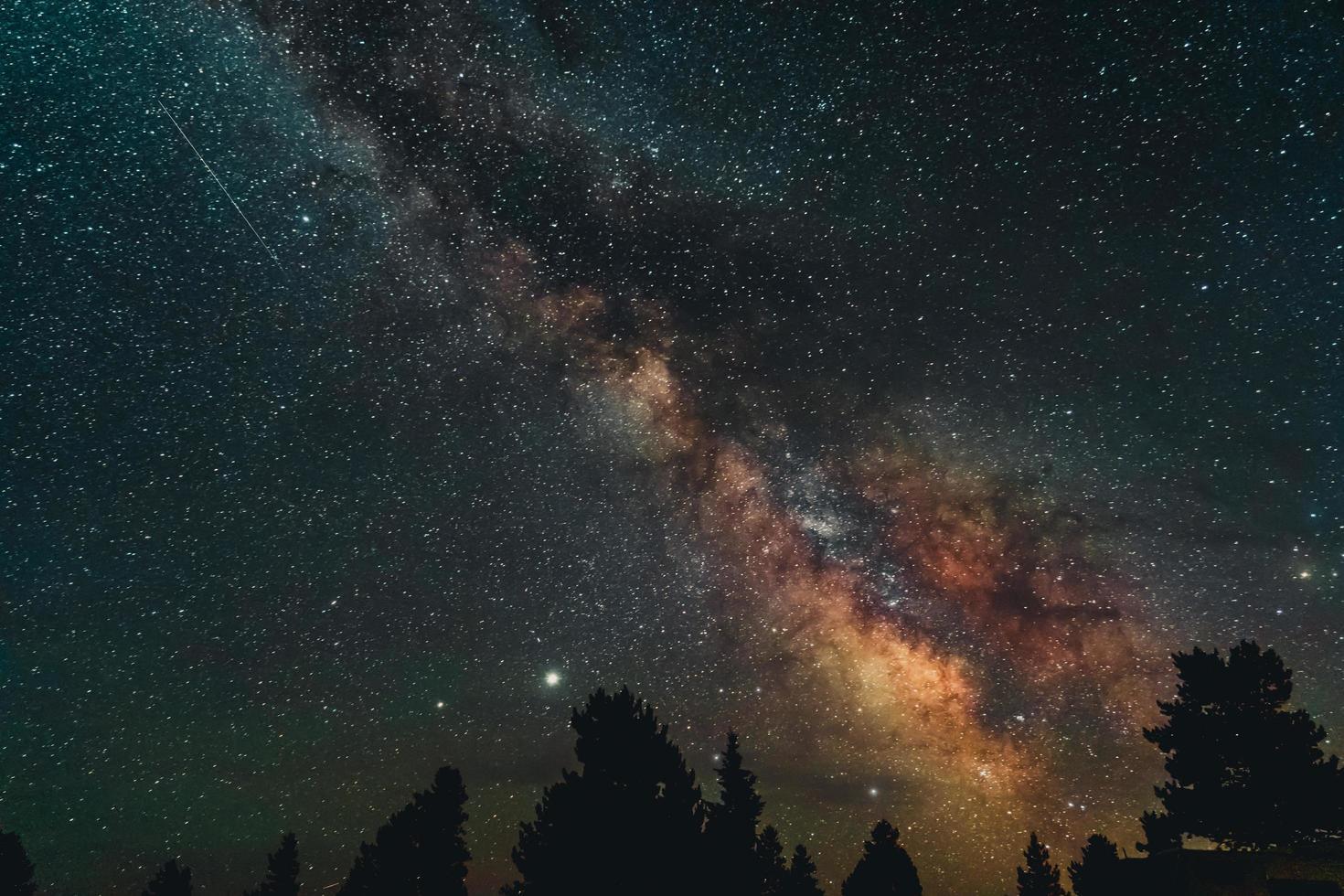 silueta de árboles bajo la noche estrellada foto