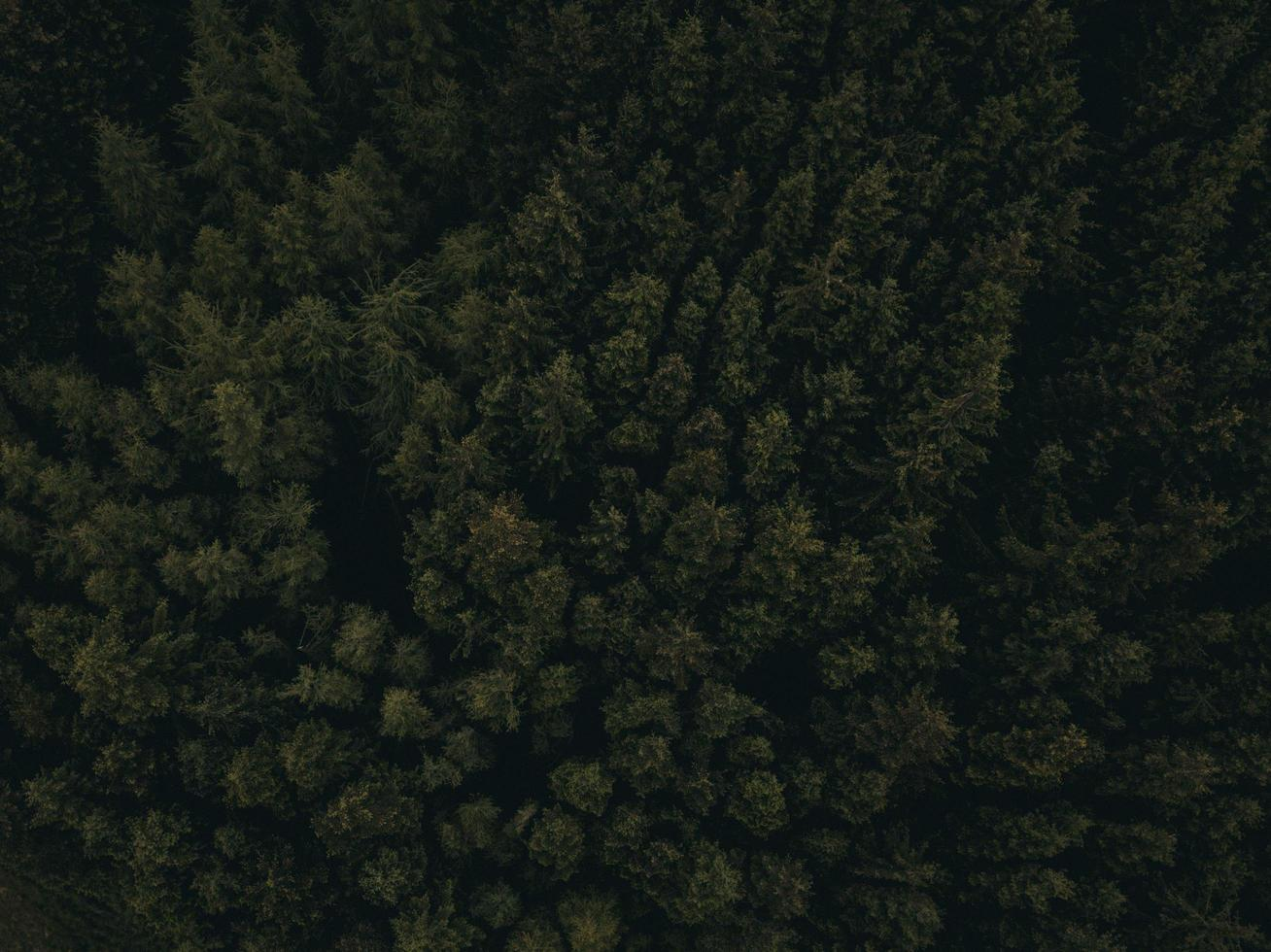 fotografia aérea de árvores verdes foto