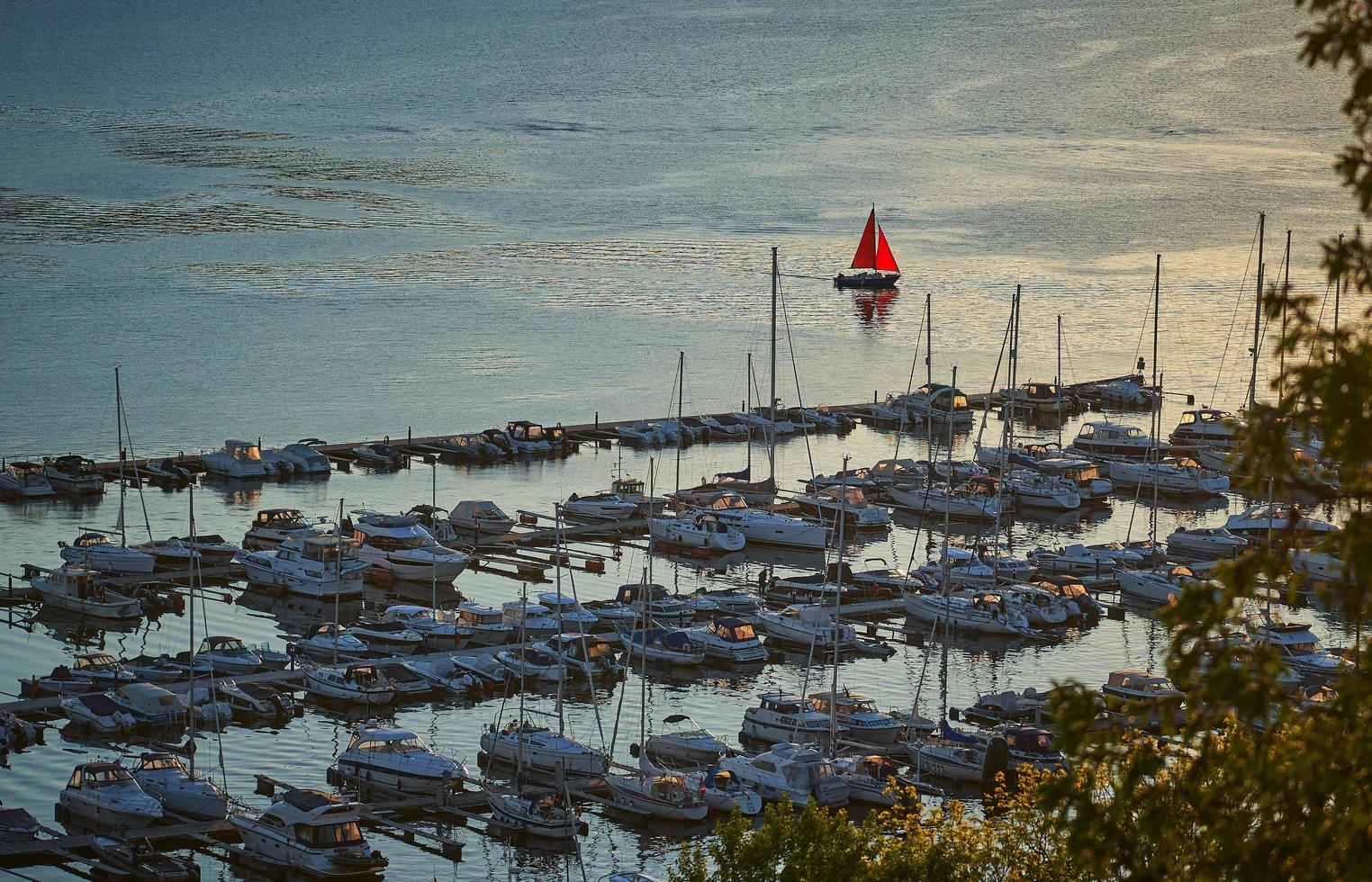 A single red sailboat photo