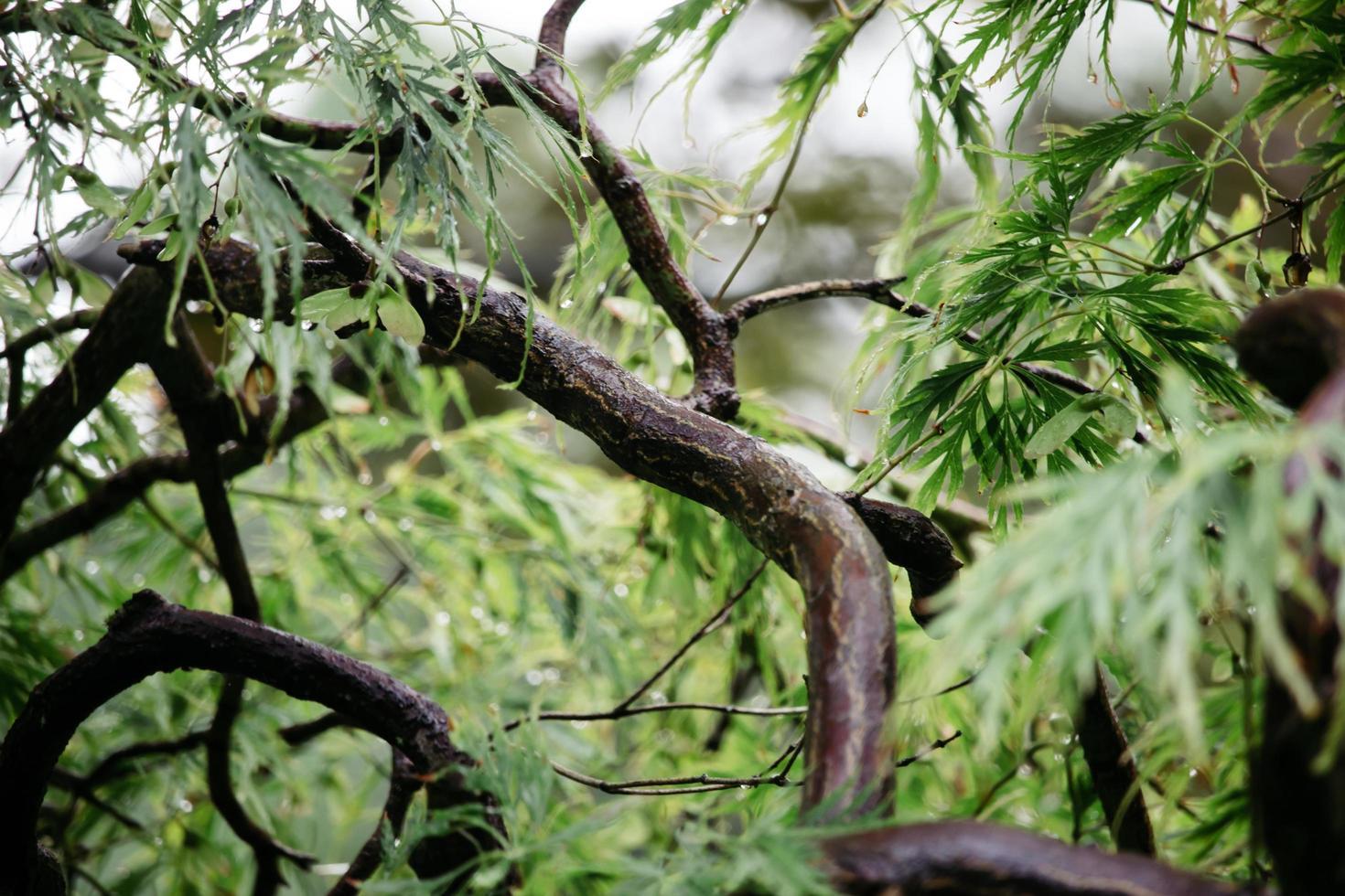árbol de hojas verdes foto