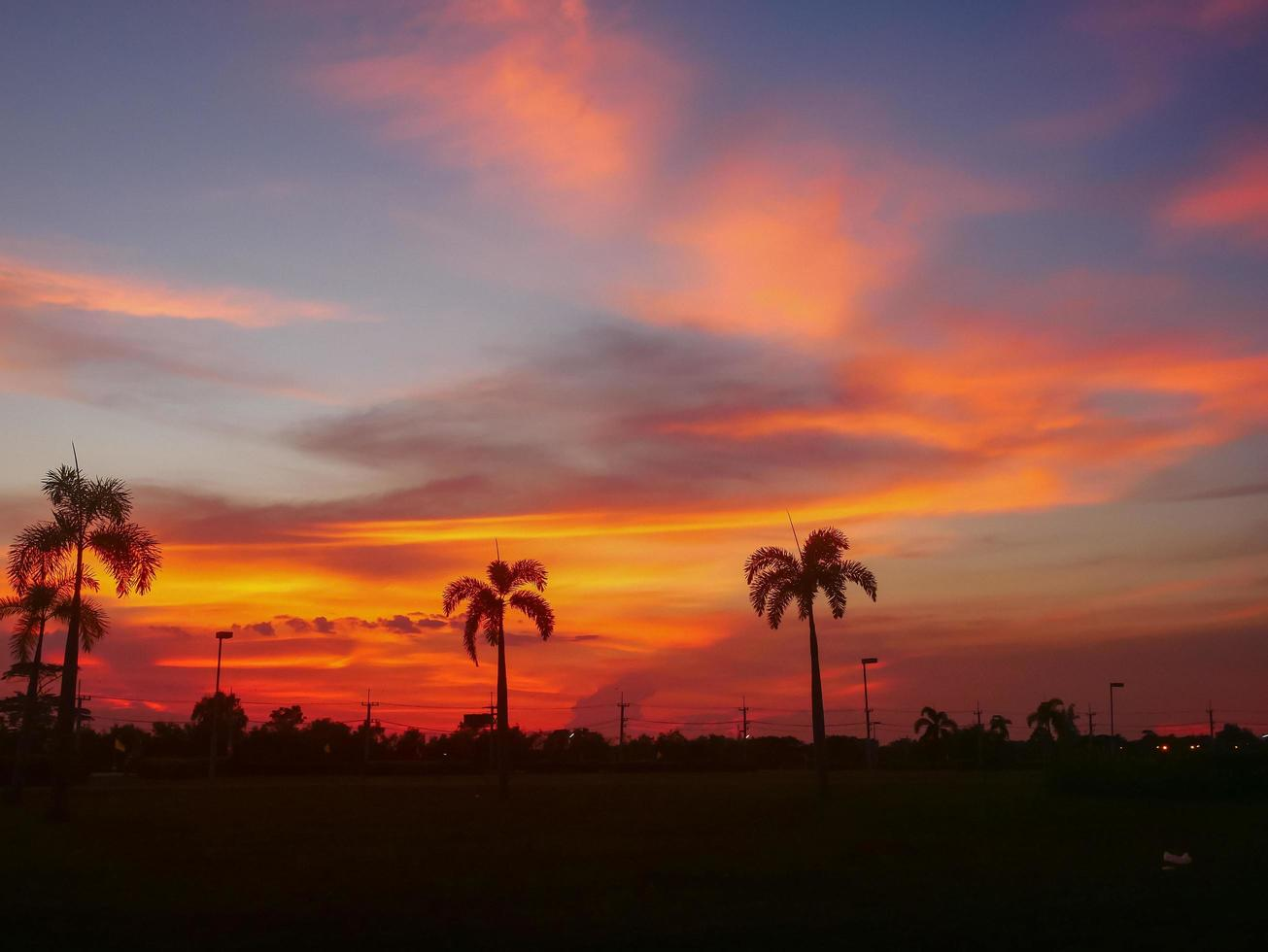 Silhouette of palm trees at sunset photo