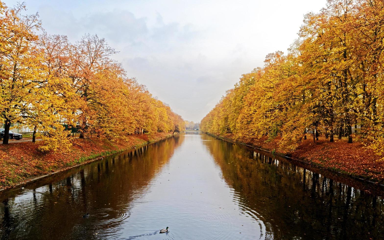 rio e árvores no outono foto
