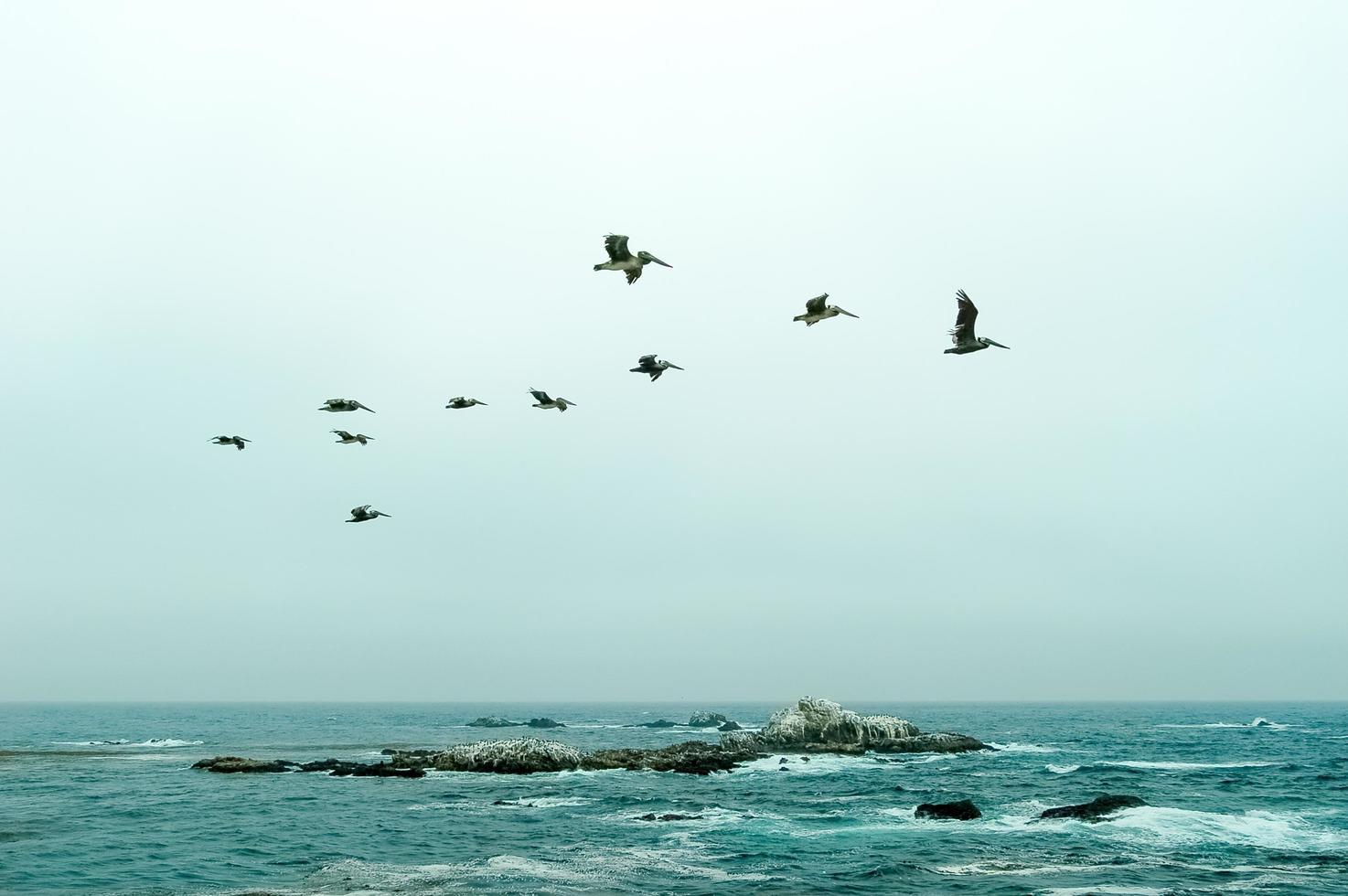 pelícanos sobre el océano foto
