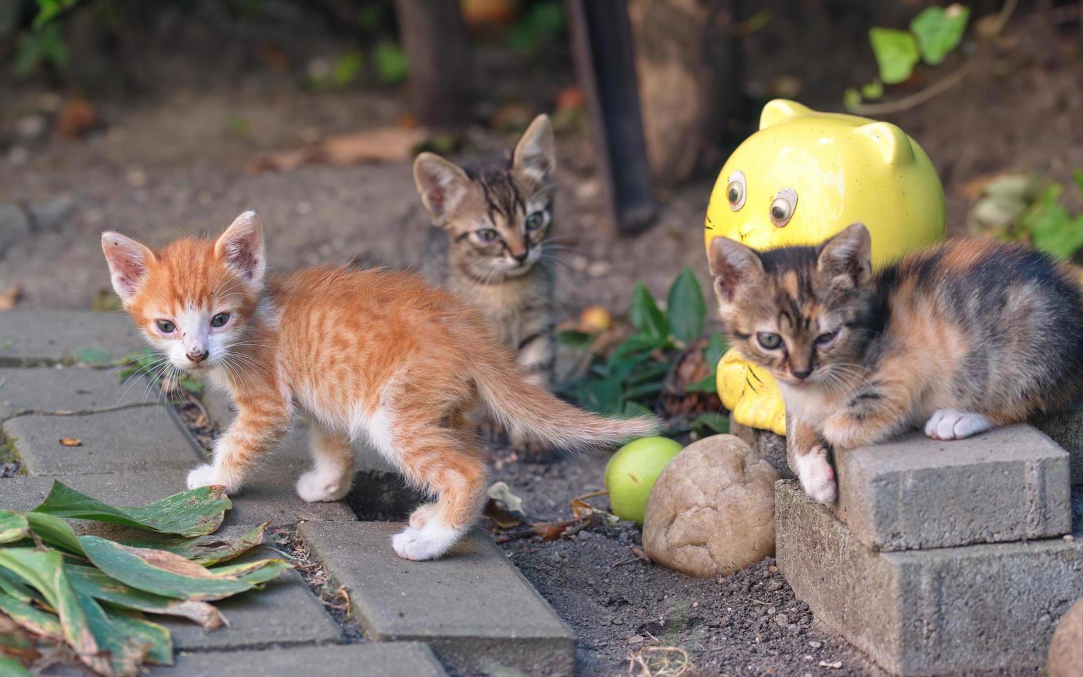 gattini in un giardino foto