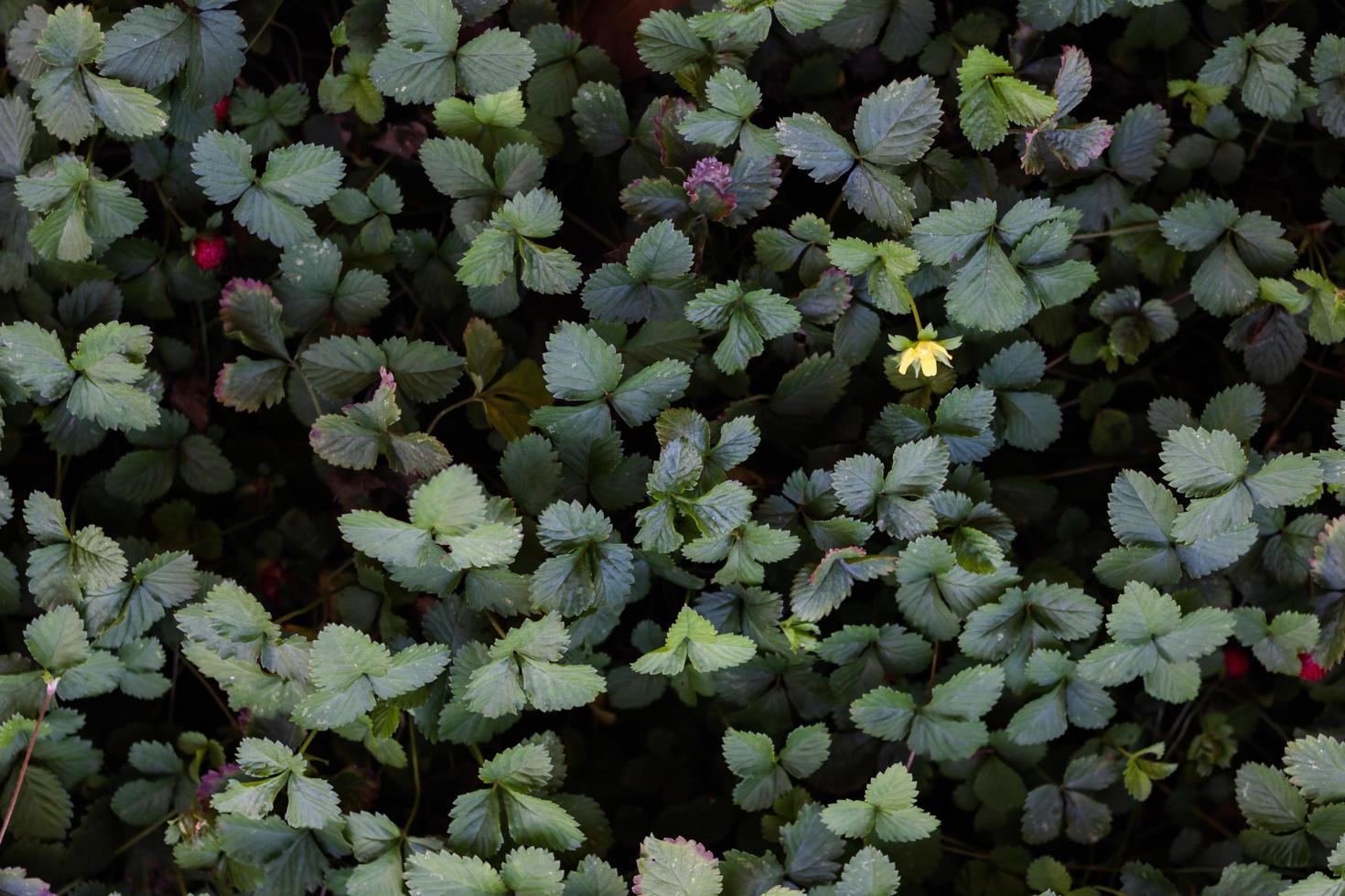 hojas verdes y flores brotando foto