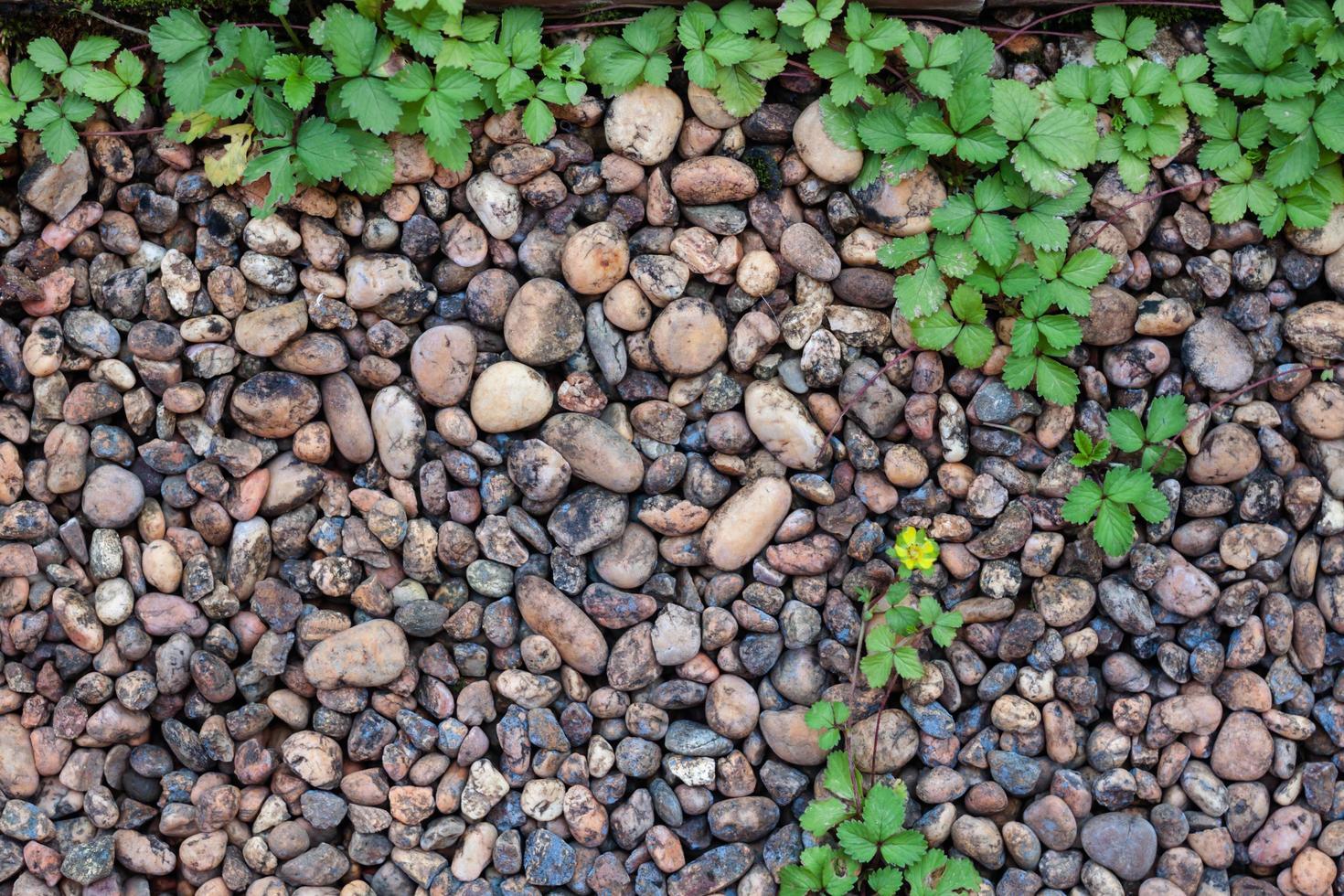 Pebble stones and bricks photo