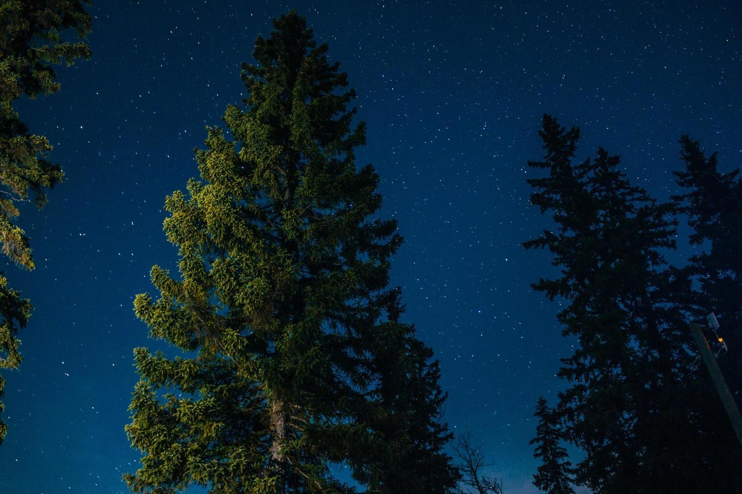 pino iluminado por la noche foto