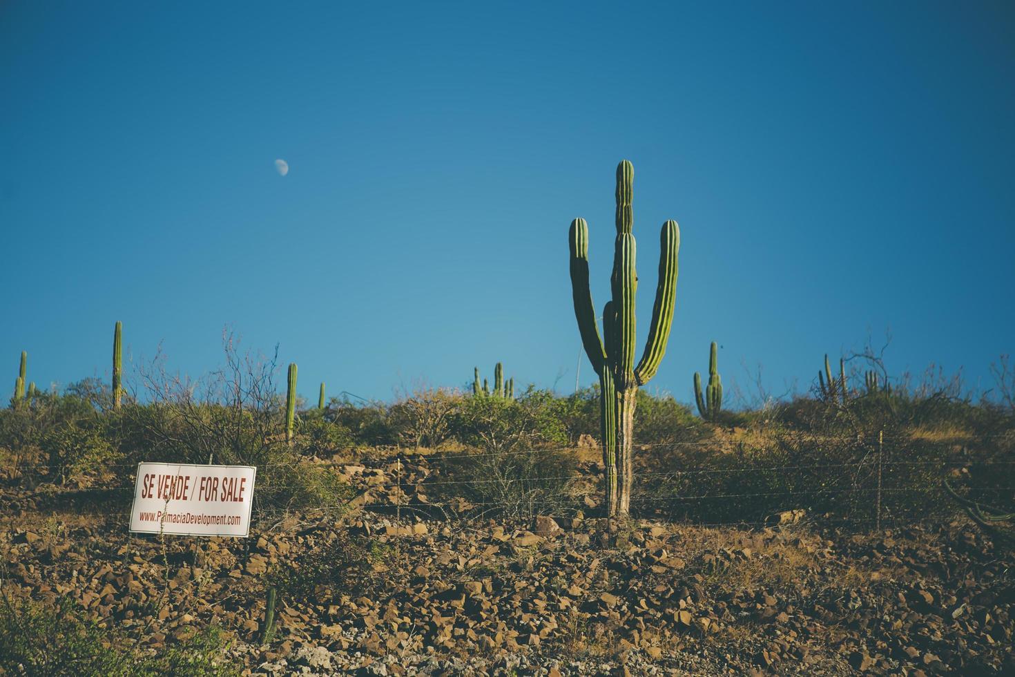 cactus en te koop bord in de woestijn foto