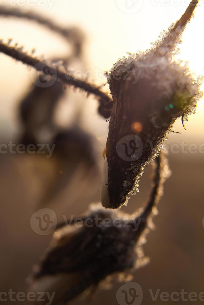 chilled harvest photo