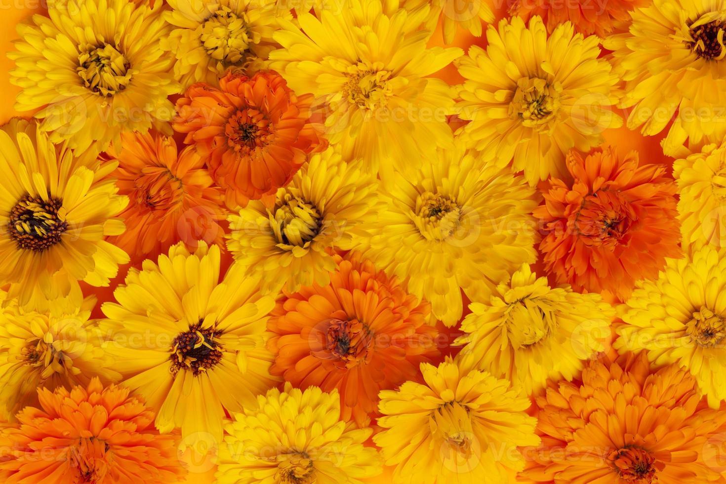 fondo de flores de caléndula foto