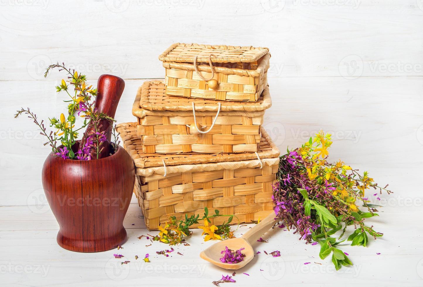 fresh healing herbs photo