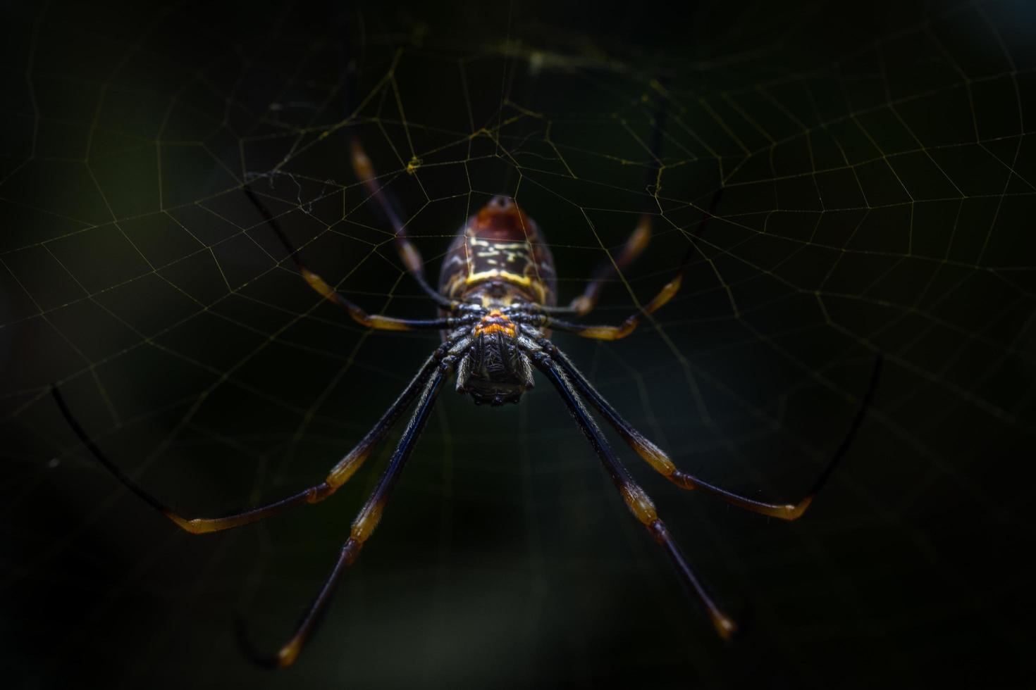 araña marrón en tela de araña foto