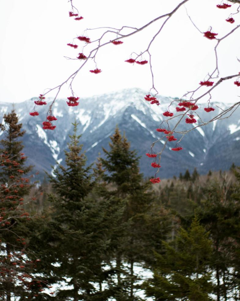 Red leaves in front of mountains and trees photo