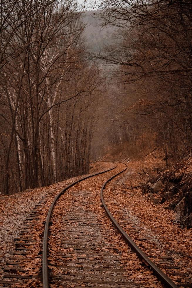 Railroad track in an autumn forest photo