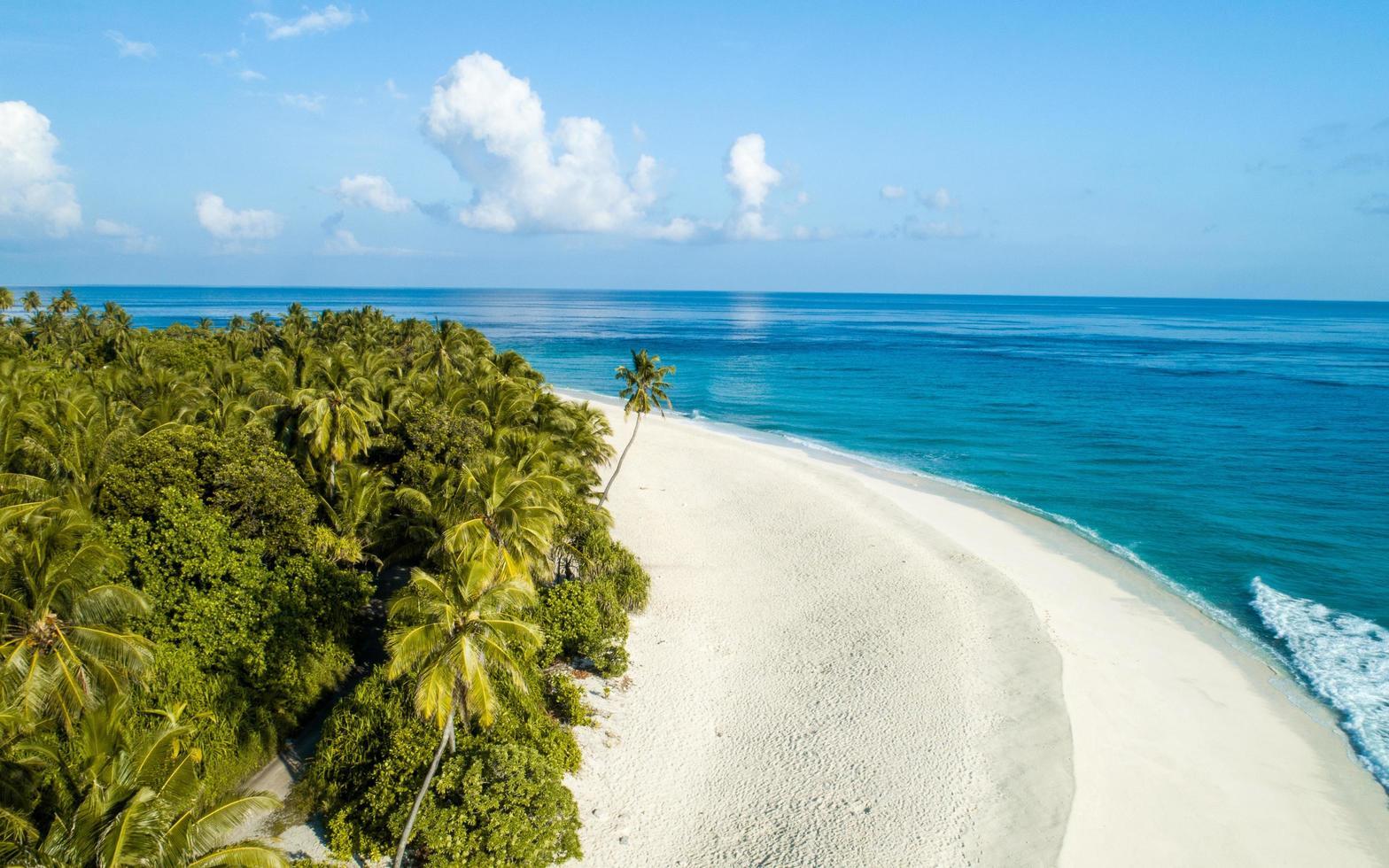 Green palm trees at the seashore photo