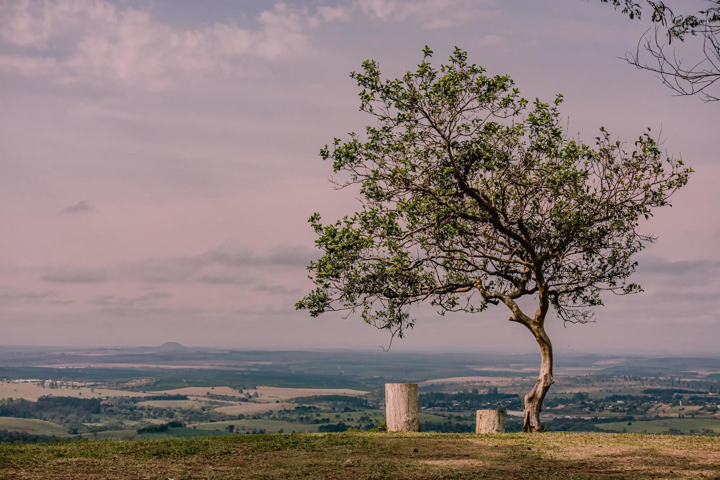 un solo árbol con dos lugares para sentarse foto