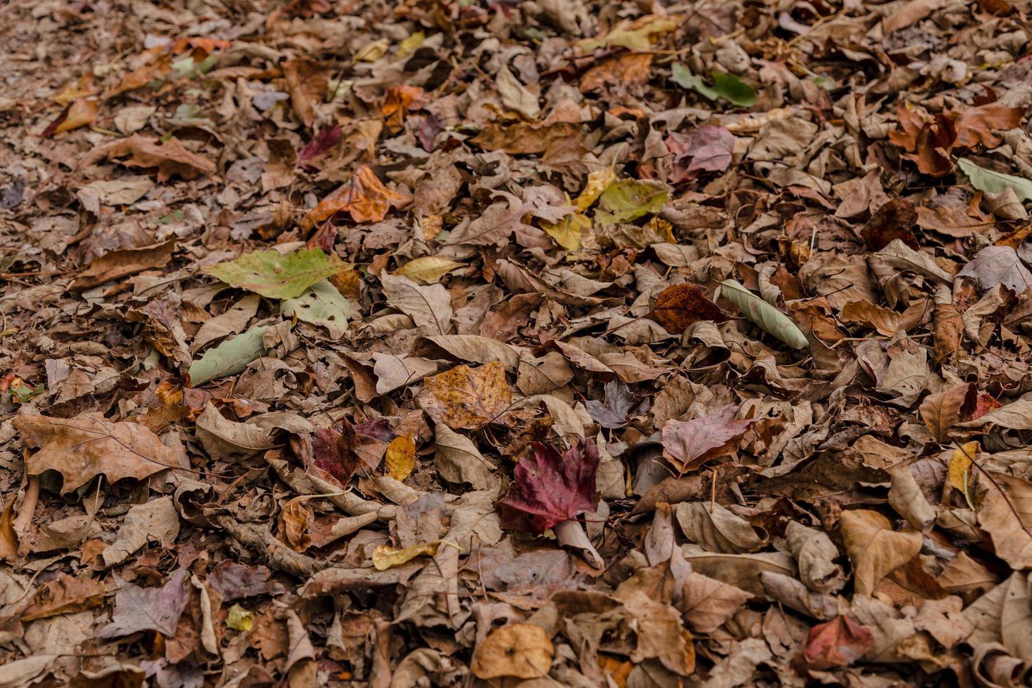 hojas caídas marrones foto