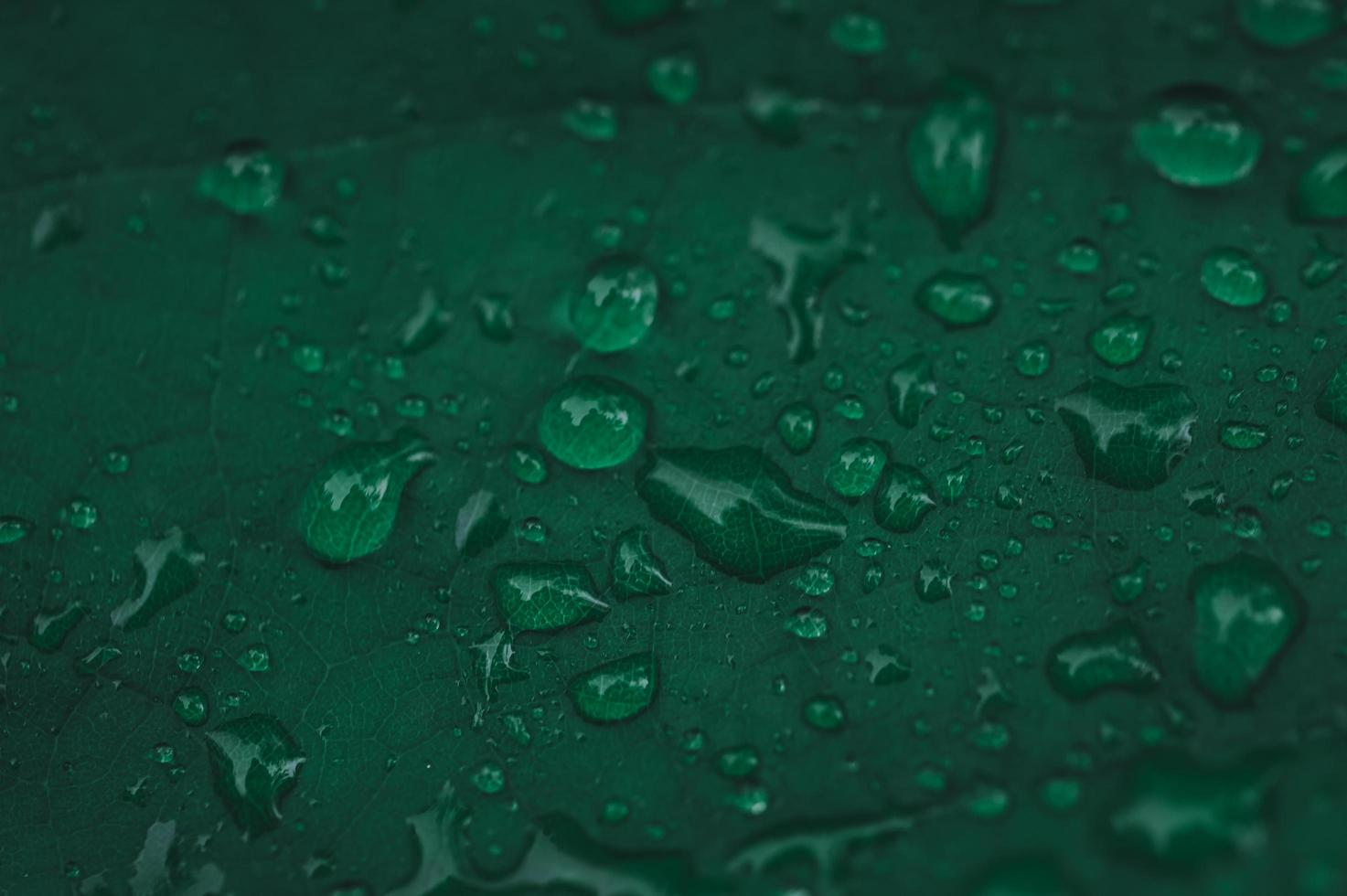 la lluvia cae sobre la hoja verde foto