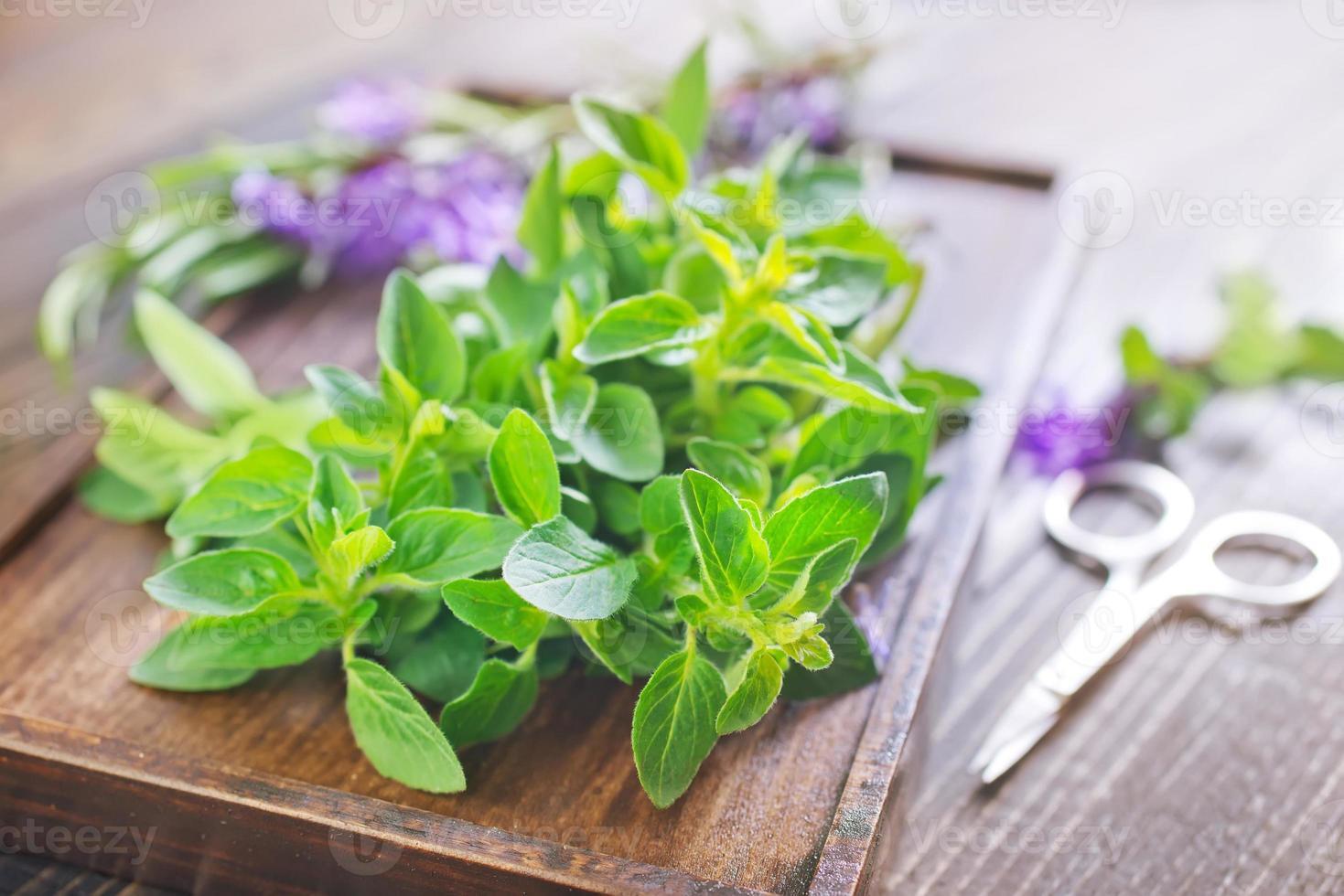 hierbas aromáticas foto