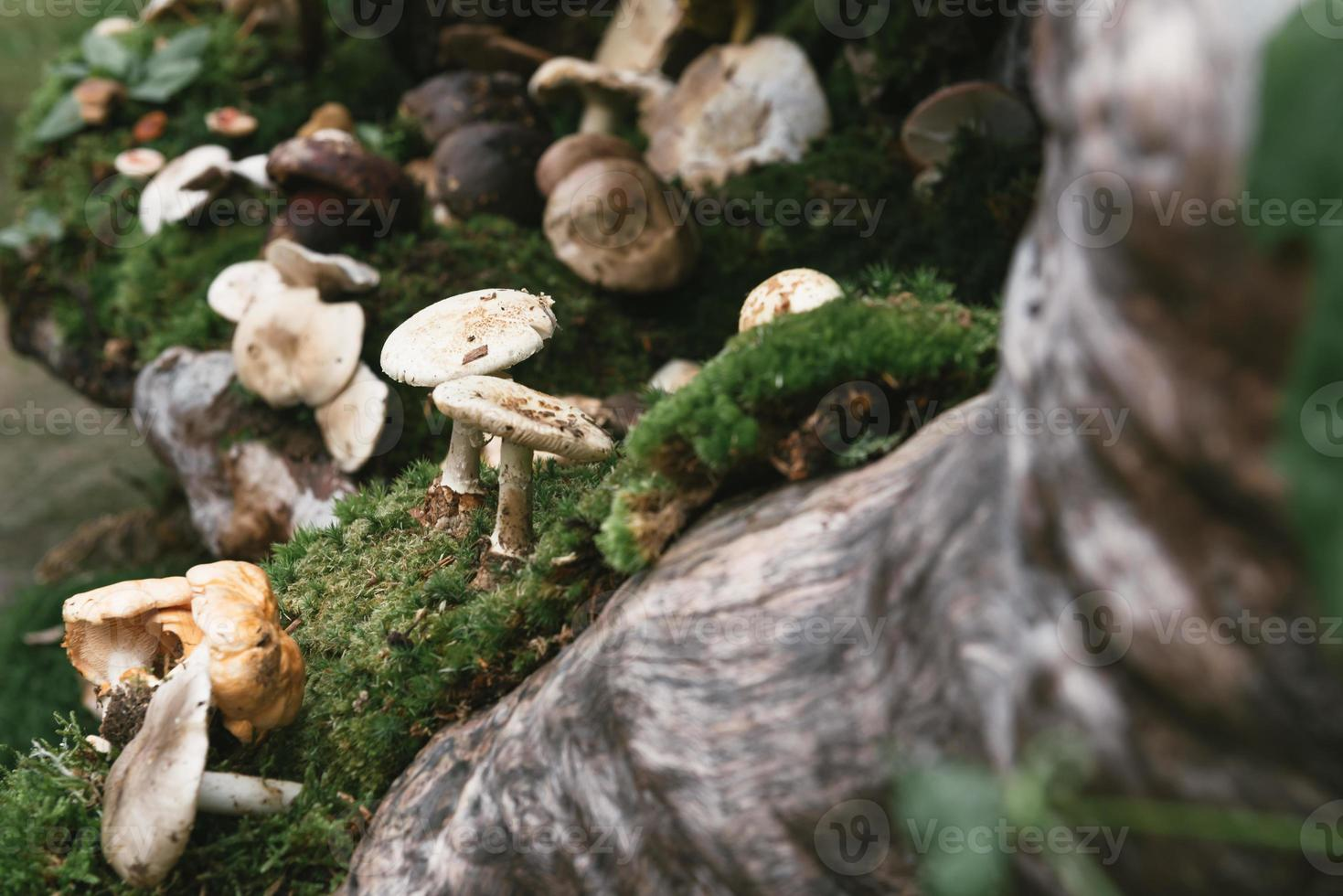 Mushroom In Forest photo