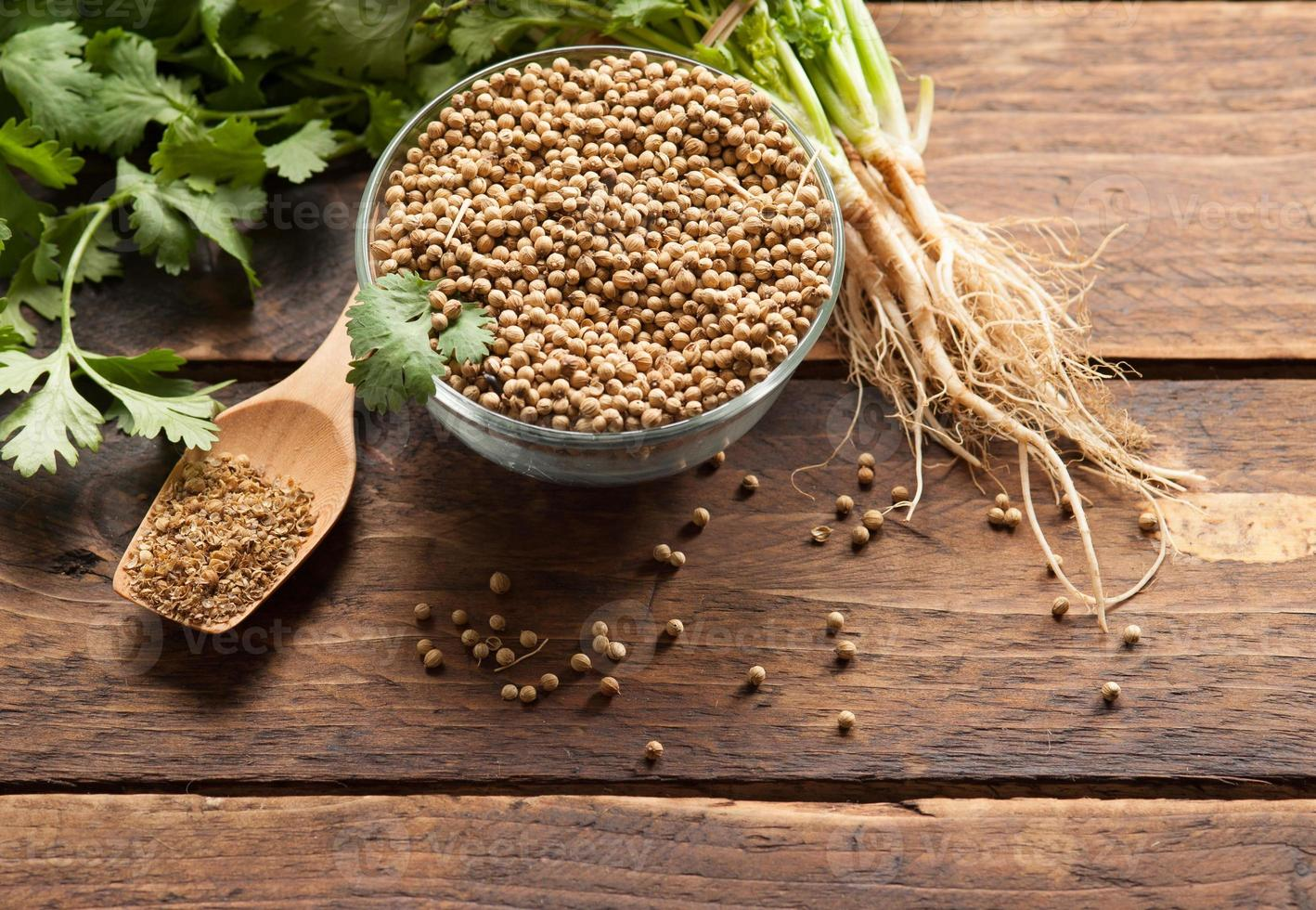 Coriander Leaves And Seeds photo