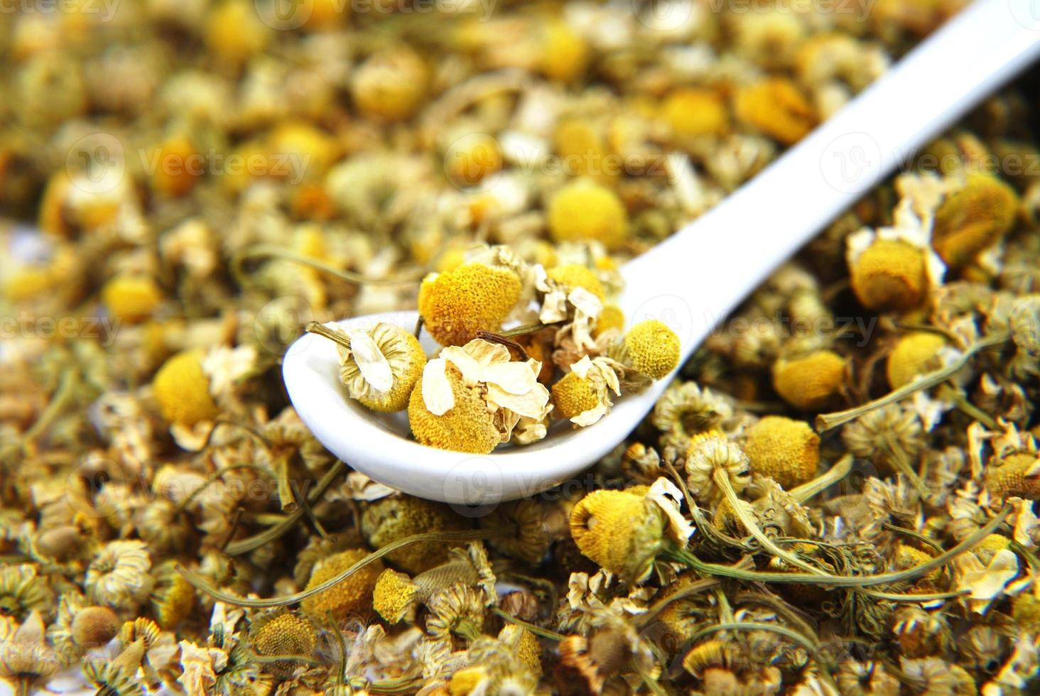 Dried chamomile photo