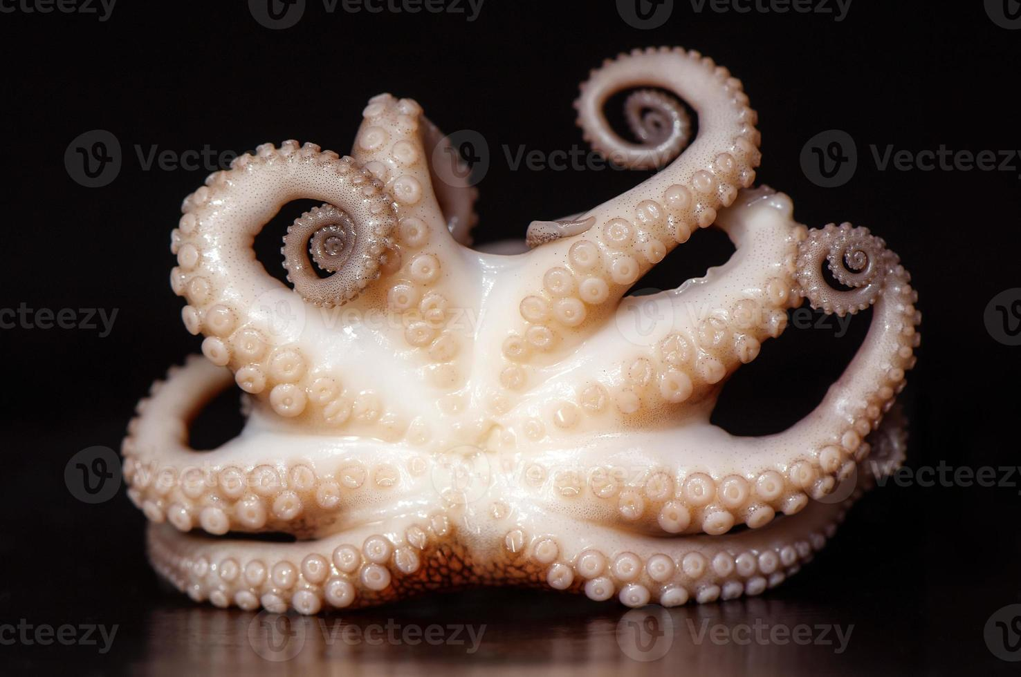 Eight arms of octopus photo