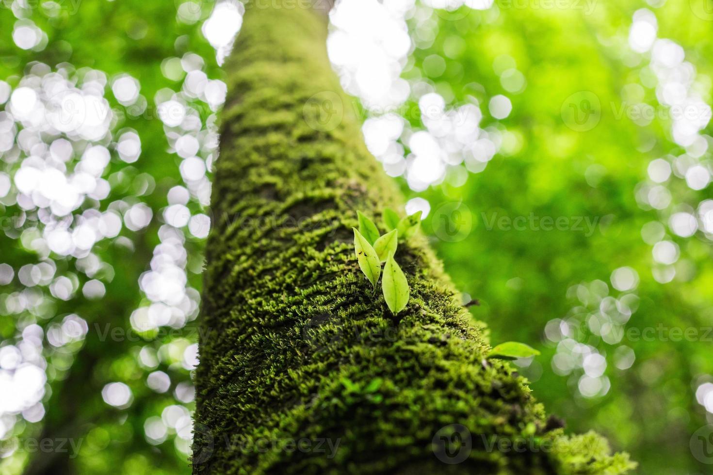 Fresh green spring leaves photo