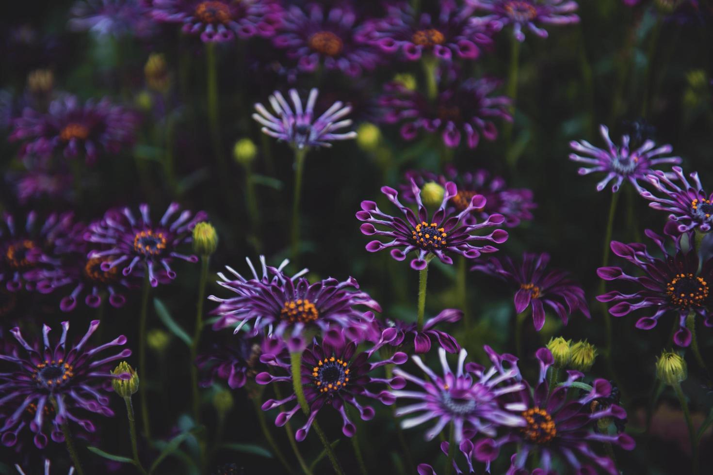 Foto de enfoque superficial de flores de color púrpura
