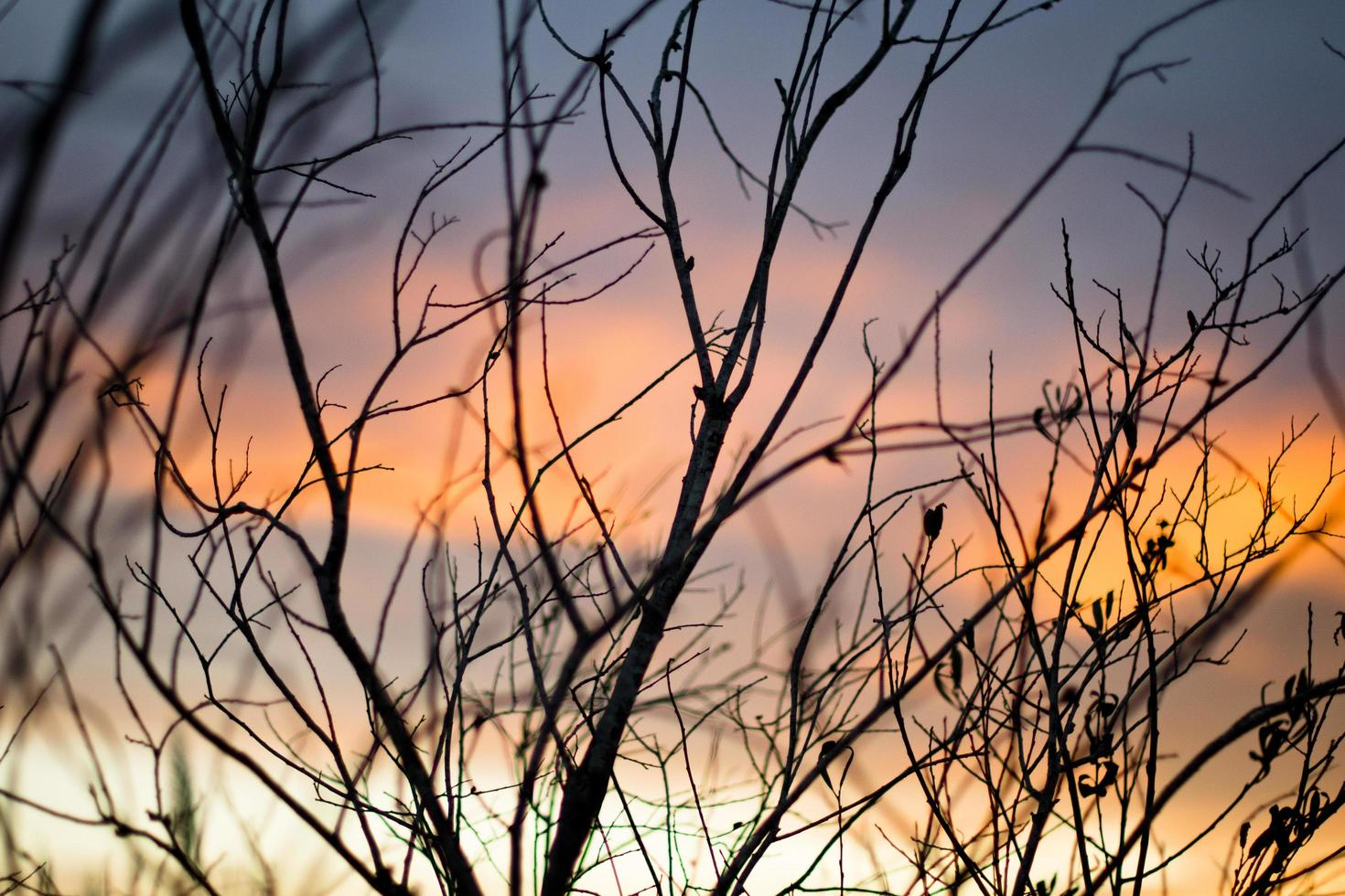 Bare trees during golden hour photo