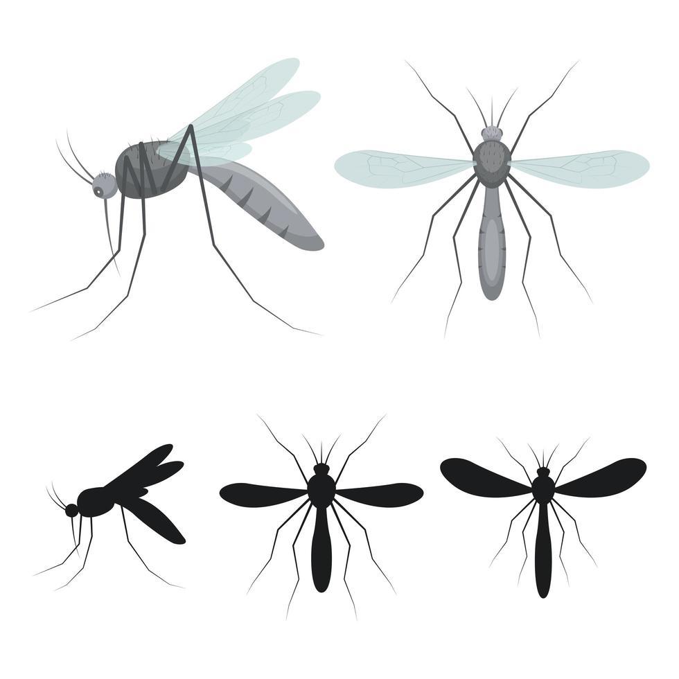insecto mosquito aislado vector