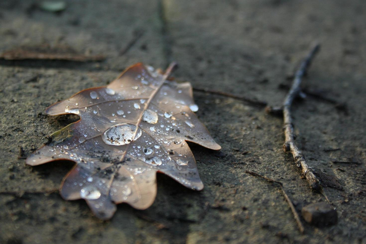 Dried autumn leaf with water droplet photo
