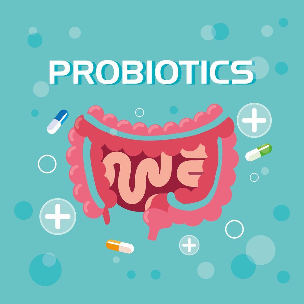 probióticos sistema digestivo con cápsulas vector