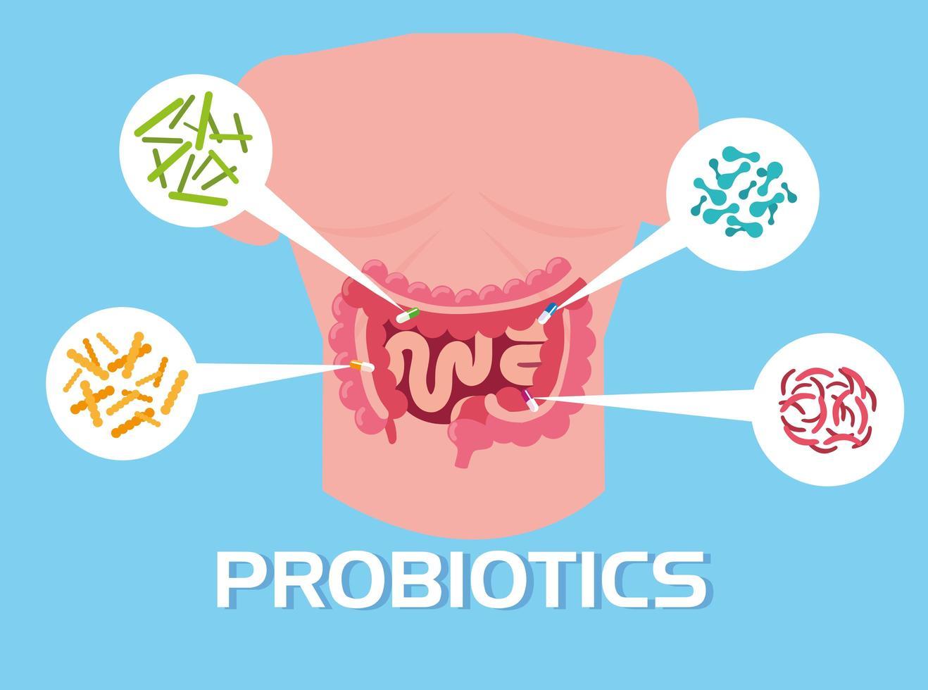 parte del cuerpo con organismos probióticos vector