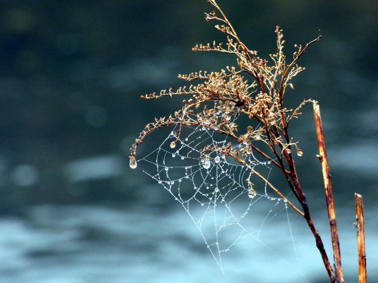 tela de araña cubierta de gotas de lluvia foto