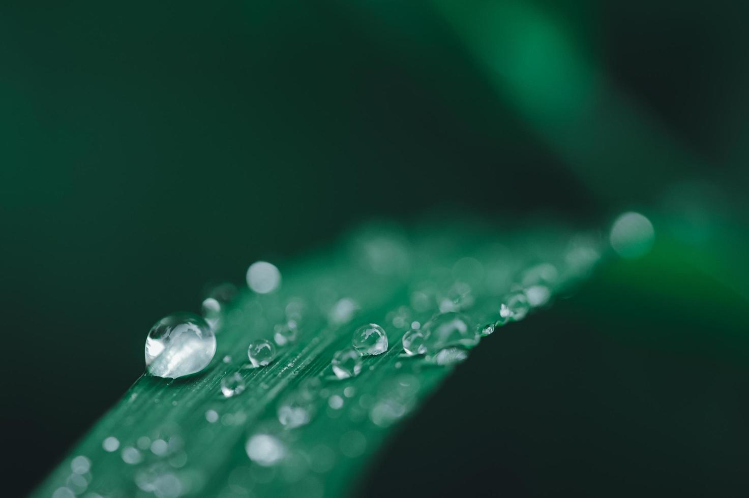 Water droplets green blade leaf photo