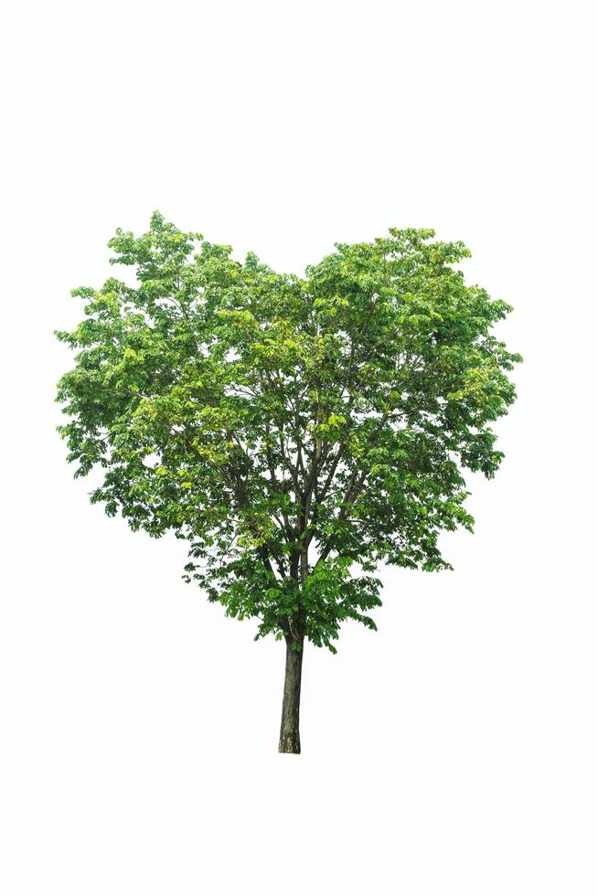 Heart shaped tree photo