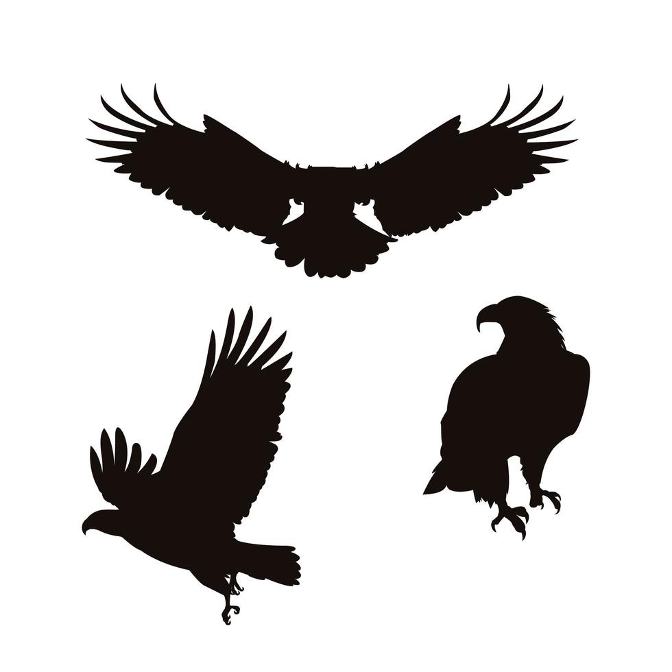 Set of bald eagle bird silhouettes vector