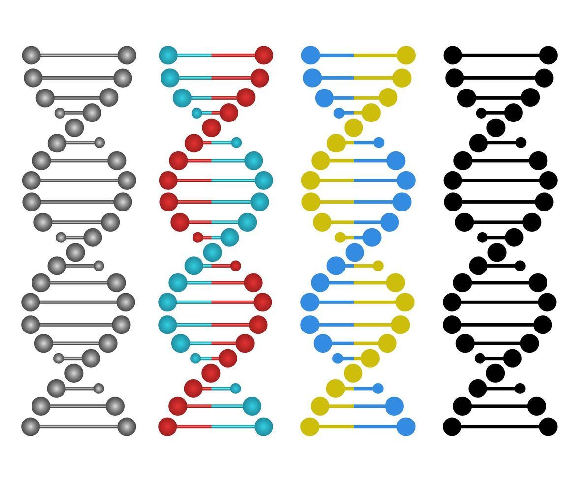 Human dna design  vector